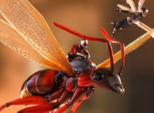 Marvel Ant-Man On Flying Ant With The Wasp